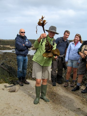 Furbellows-kelp-IMG_2639.jpg