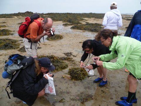Marine-life-of-Jersey-guided-walks.Jersey-walk-adventures-P1010040.jpg