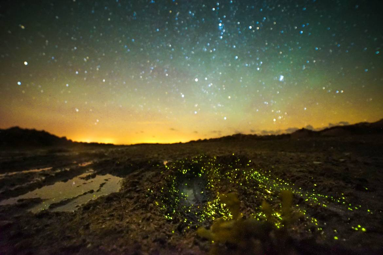 Night-walks-in-search-of-bioluminescence.-Photo-by-Phil-Halper-20547492499_4e8db5ac37_o.jpg