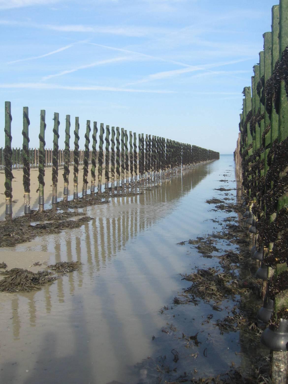 Jersey-Mussel-farming.jpg