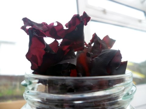 Dulse-ready-for-cooking-with.-Jersey-Walk-Adventures.jpg