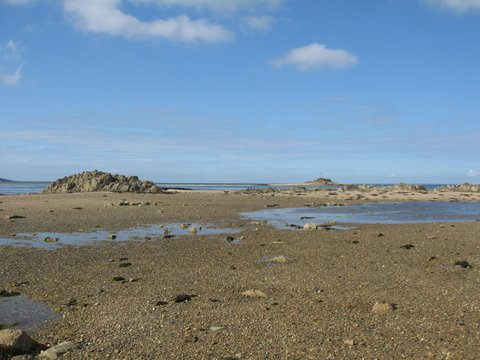Seymour-gullies-on-the-rising-tides-Jersey.jpg
