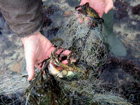 Discarded-Set-net.By-catch-in-Jersey.jpg