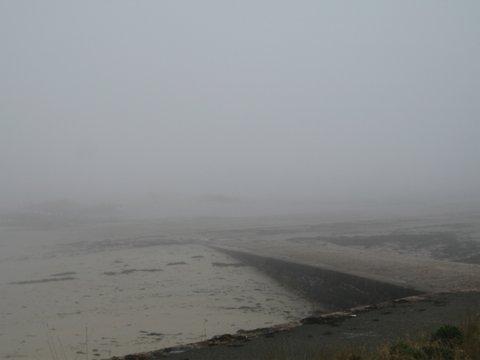 Seymour-in-fog-IMG_6908.jpg