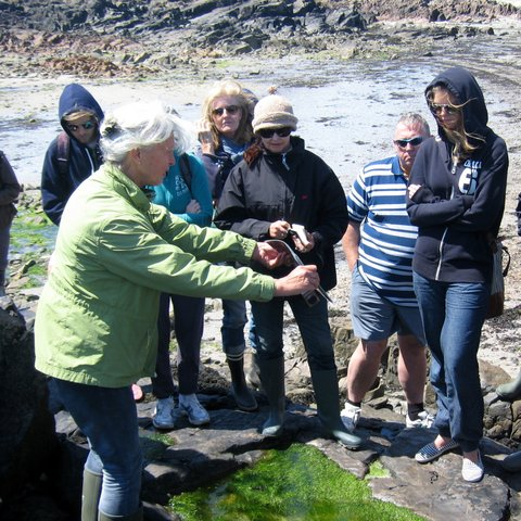 Edible-seaweed-foraging-in-Jersey..jpg