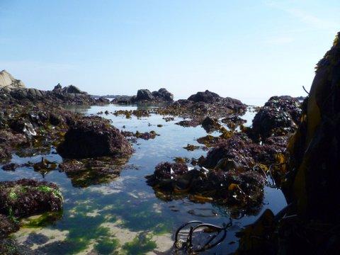 Jersey-seashore-P1000378.jpg