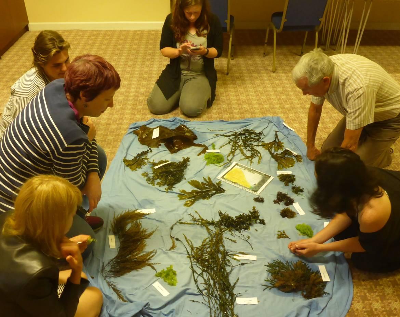 Seaweed-foraging-course-P1230327-001.jpg
