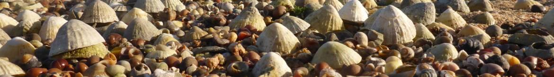 Seashells-on-the-seashore.-Jersey-Walk-Adventures-P1180900-scaled.jpg