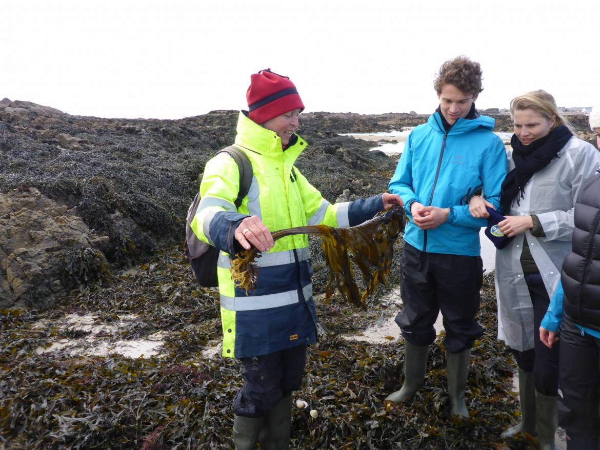 Edible-seaweed-foraging-courses-P1200586-scaled.jpg